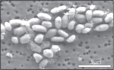 Fosfor Yerine Arsenik